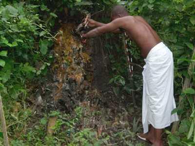 Photo Marabout n°304 zone Martinique par Gambada Djogbe